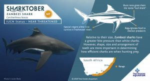 We Care: Sharktober