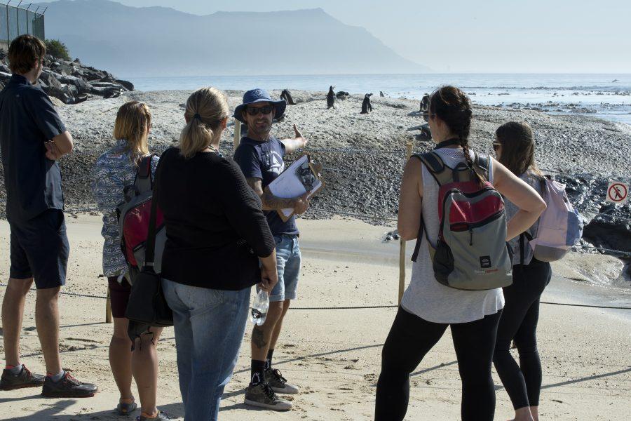 Marine Safari African penguin walk